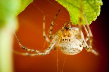 nahled_pavouci